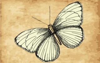 Illustration of a moth