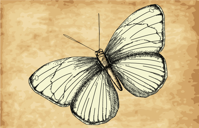 Illustration of a moth